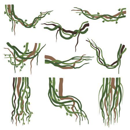 Illustration pour Tropical Winding Liana Branches Set, Jungle Plants Decorative Elements, Rainforest Flora Vector Illustration - image libre de droit