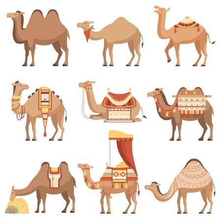 Ilustración de Camels Set, Desert Animals with Bridles and Saddles Decorated with Ethnic Ornament Vector Illustration - Imagen libre de derechos