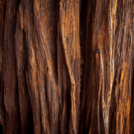 the image of the wood texture