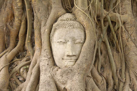 Head of sandstone buddha in the bodhi tree roots at Mahathat temple, Ayutthaya, Thailand
