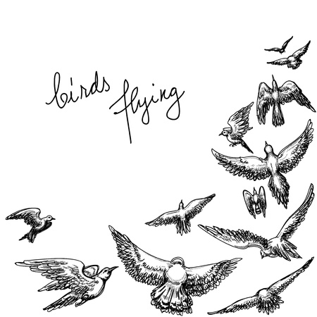 Flying birds background; pencil drawing vector illustration