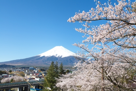 Mountain Fuji in spring ,Cherry blossom Sakura の写真素材
