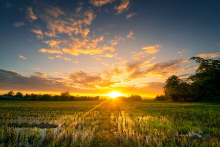Foto de Natural scenic Beautiful rice field and sunset at Thailand. - Imagen libre de derechos
