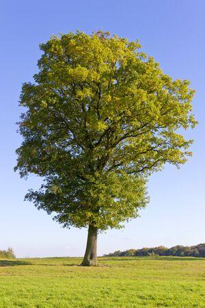 Photo pour Big beautiful tree - image libre de droit