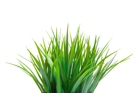 Photo for The green grass isolated on white. Side view. - Royalty Free Image