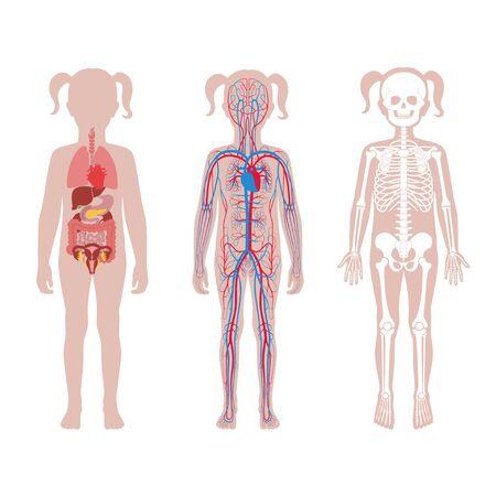 Illustration pour Internal structure of teen girl body. - image libre de droit
