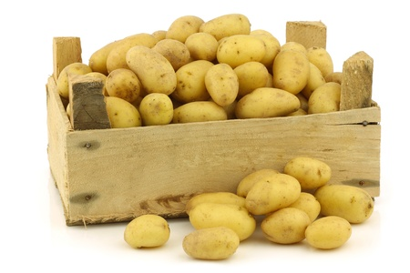freshly harvested dutch seed potatoes  krieltjes  in a wooden box on a white background
