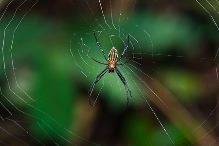 Photo for  Spider and web  - Royalty Free Image