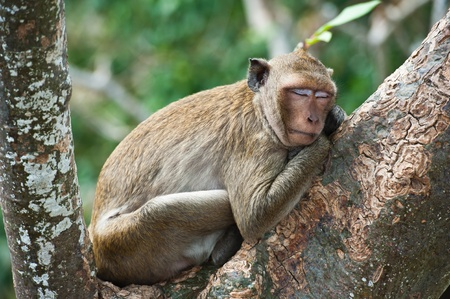 Monkey Sleeping on Tree