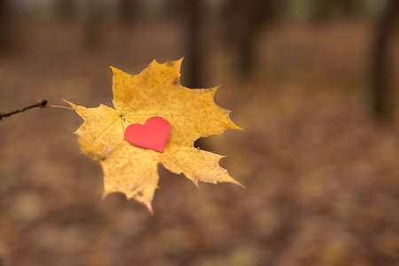 Heart on maple leaf. Open pure heart symbol, copy space. Unrequited, one-sided love or loneliness concept. Unrequited love victim of Valentine day. Beautiful autumn background.