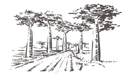 Illustration pour Road through baobab trees, Madagascar. Hand drawn Madagascar sketch illustration. Isolated on white background. - image libre de droit