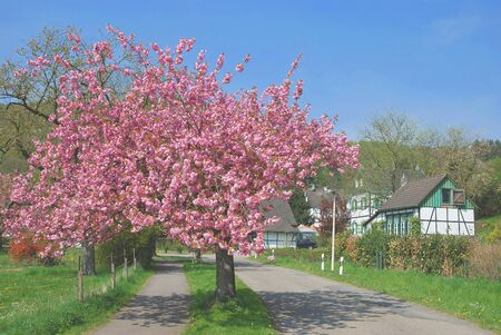 Springtime,Solingen,Bergisches Land,Germany