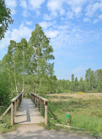 wooden Footpath in Ohligser Heide Nature Reserve,Bergisches Land,Solingen,Germany