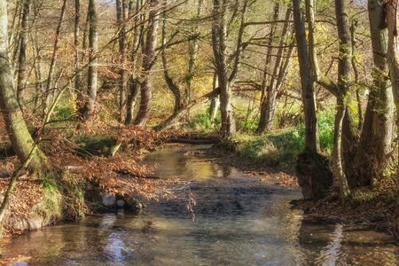 Duessel River in famous Neandertal,North Rhine westphalia,Germany