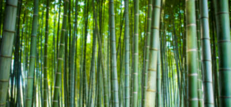Photo pour (Selective focus) Stunning view of a defocused bamboo forest during a sunny day. Arashiyama Bamboo Grove, Kyoto, Japan. Natural, green background with copy space. - image libre de droit