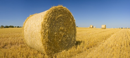 Golden Hay Bales On A Clear Summer Day