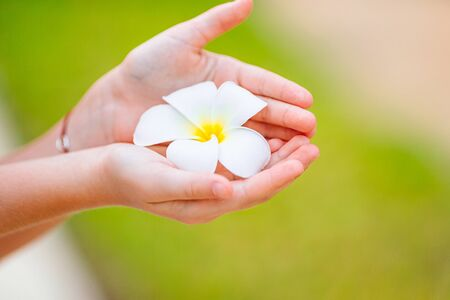 Photo for Beautiful frangipani flowers in the hands outdoors - Royalty Free Image