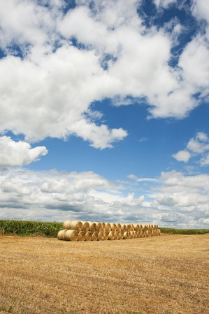 A neat row of hay bales in a