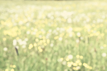 Defocused Summer Meadow in Sunlight Perfect as a spring or summer background.