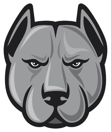 pit bull head  pit bull terrier