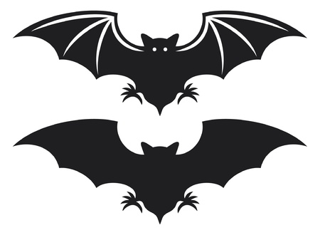 silhouette of bat  flight of a bat