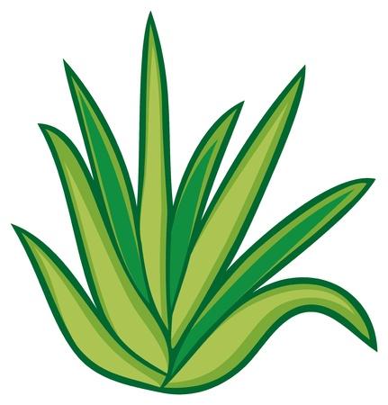 Illustration for aloe vera plant - Royalty Free Image
