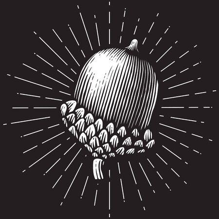 Illustration pour acorn- vintage engraved vector illustration (hand drawn style) - image libre de droit