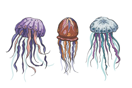 Illustration pour Jelly fish vector set. Sea animal vector collection. Marine hand drawn tropical animals. Perfect for pront and web. - image libre de droit