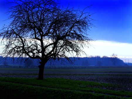 Tree in the evening