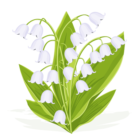 Illustration pour Lily of the valley, spring bouquet of delicate flower, vector illustration. White buds forest flowers bluebells, green stalks and leaves isolated on white background, botanical realistic flat drawing - image libre de droit