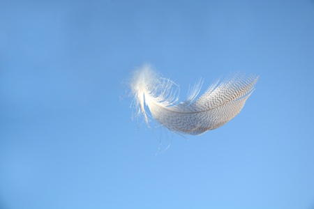 Blue heaven sky with light white striped down feather floating weightless in the air