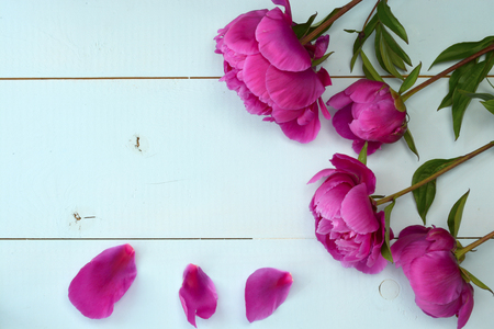 Purple peony on old empty copy space wooden boards. Place for text. Top view background