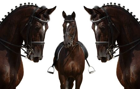 Dressage: head of horse isolated on white