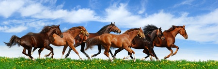 Herd Galloping Against A Blue Sky