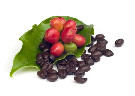coffee beans and red  ripe coffee Isolated  on white background