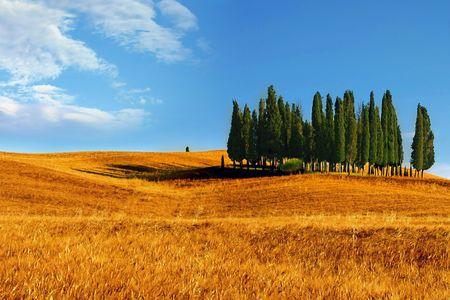 Foto per Paesaggio toscano - Immagine Royalty Free