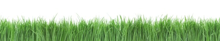 Seamless green grass panorama isolated on white background