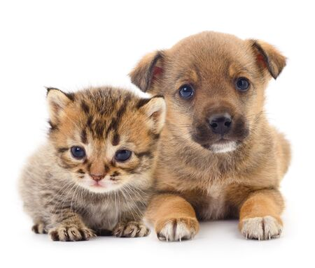 Photo for Baby puppy and kitten isolated on white - Royalty Free Image