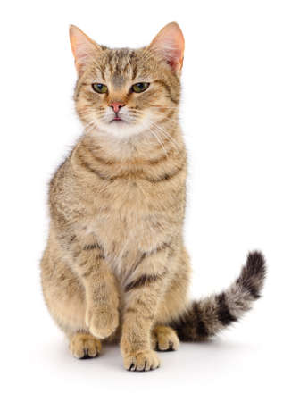 Photo pour Small brown kitten isolated on white background. - image libre de droit