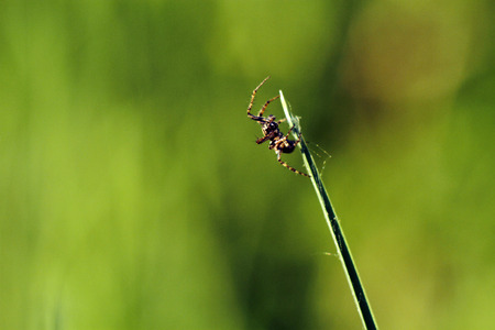 Tiny spider on grass