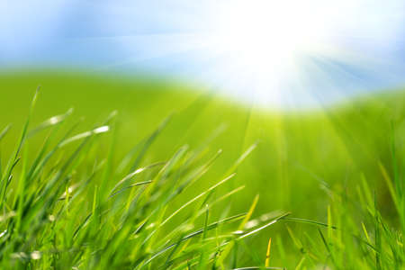 Photo pour Fresh green grass against blue sky and sun beams. Abstract spring background. - image libre de droit