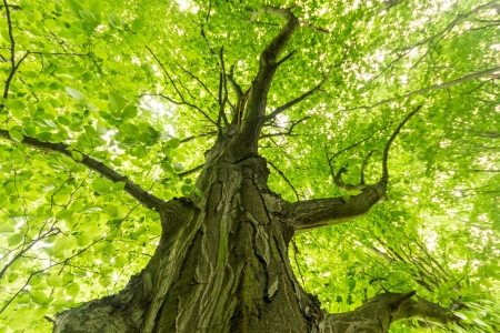 old big tree on color green background with green leafs