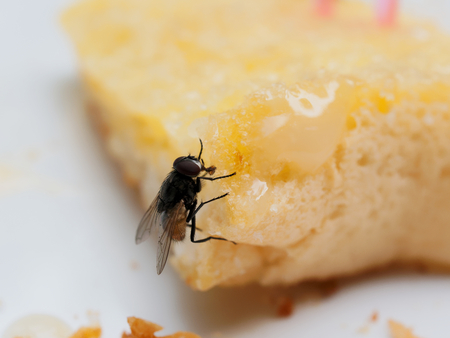 Photo pour House flies on bread with butter with pink plastic fork sticking on over white plate - image libre de droit