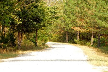 A beautiful view of a country road between the trees