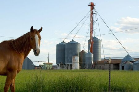A horse on a working farm