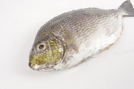 Photo pour Fresh lamayo fish isolated on white. - image libre de droit