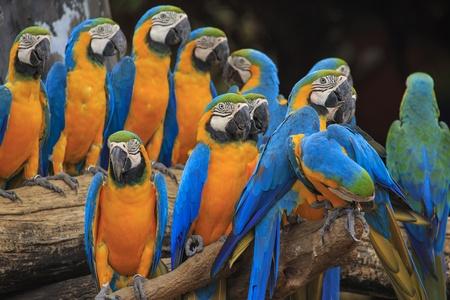 Beautiful Macaws