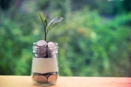Sprout growing on glass piggy bank in saving money concept with filter effect retro vintage style