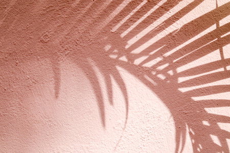 Foto de abstract background textuer of shadows leaf on a concrete wall - Imagen libre de derechos