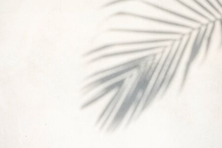 Photo for abstract background texture of shadows palm leaves on a concrete wall - Royalty Free Image